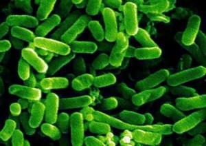 2017-04- Bazillus e.coli-ed01-425x300
